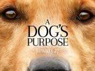 A Dog's Purpose (2017) | หมา เป้าหมาย และเด็กชายของผม