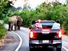 รอแพร๊บ! ช้างขอใช้ถนนเคลียร์ปัญหาส่วนตัวกันซักครู่