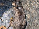 ไฟไหม้ชุมชนวัดมะกอก หนุ่มกู้ภัยเข้าไปช่วยแมว โดนแมวตบเลือดไหล สุดท้ายปลอดภัยทั้งคนและแมว