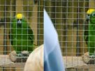 """เอาไปเก็บแทบไม่ทัน! นกแก้วสวนสัตว์ """"สบถใส่คนดู"""" หลังจากเริ่มแสดงโชว์ได้แค่ 20 นาที"""